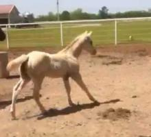 "Machine Made Foal out of ""Zip n Therapy"""