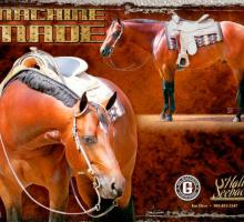 2012 Equine Chronicle Calendar ~ Machine Made